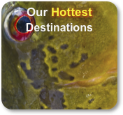 Our Hottest